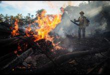 amazzonia bolsonaro di caprio