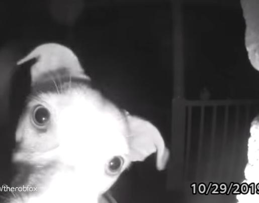 cane suona il campanello